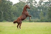 Secretariat – Ein Pferd wird zur Legende – Bild: Sat.1