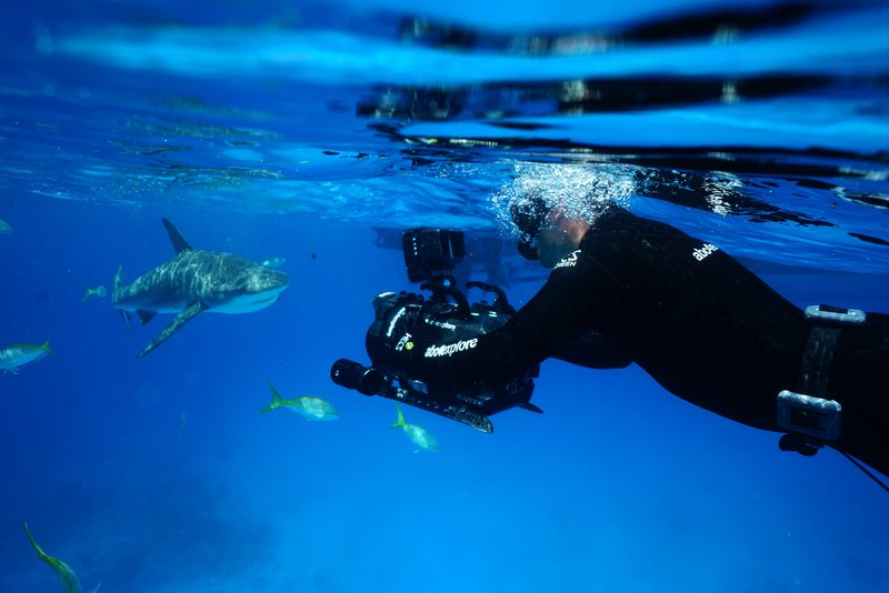 Behind The Scenes with underwater camera man Andy Casagrande filming Reef Sharks feeding on Chum at Stuart Cove's in Nassau, Bahamas. – Bild: Discovery Communications