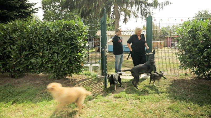 Der Hundeprofi Unterwegs S08e03 Nachtdienst Im Hunde Altersheim Fernsehserien De