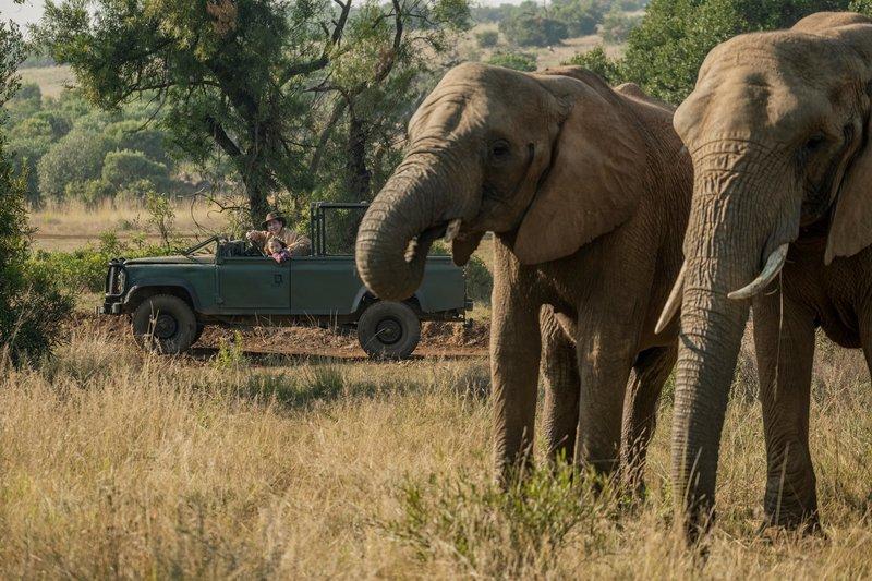 Elefanten, endlich. Die ersten, die Fritz (Guido Hammesfahr) und Nandi (Sohela Oliphant) bei der Wildtierzählung sehen. – Bild: ZDF und Emil Wessels.