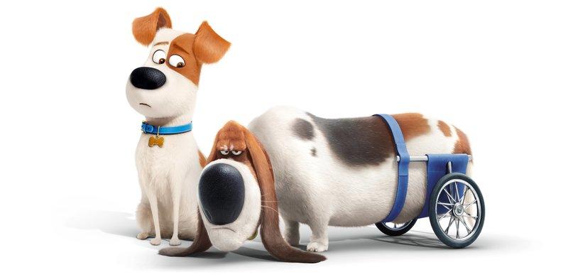 """""""Pets"""", Der kleine Terrier Max hat bei Katie in Manhattan sein Glück gefunden. Während sein Frauchen in der Arbeit ist, vertreibt er sich mit den benachbarten Haustieren die Zeit. Als Katie mit dem ungehobelten, zotteligen Streuner Duke nach Hause kommt, entbrennt ein Streit ums traute Heim. Dabei gehen Max und Duke Hundefängern ins Netz, werden aber von dem rachsüchtigen Kaninchen Snowball und dessen wilder Bande verstoßener Haustiere befreit. Während die beiden ihnen in die New Yorker Kanalisation folgen müssen, startet Zwergspitzhündin Gidget eine beherzte Suchaktion nach Max. SENDUNG: ORF eins - DI - 25.12.2018 - 18:25 UHR. - Veroeffentlichung fuer Pressezwecke honorarfrei ausschliesslich im Zusammenhang mit oben genannter Sendung oder Veranstaltung des ORF bei Urhebernennung. – Bild: ZDF"""