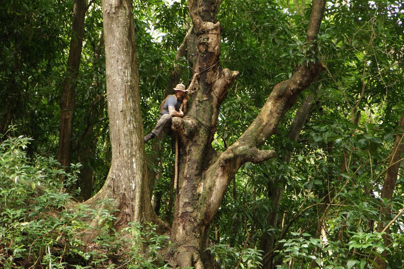 Reames uses a tree for support to get up to the canopy crawl. – Bild: Discovery Channel / Discovery Communications