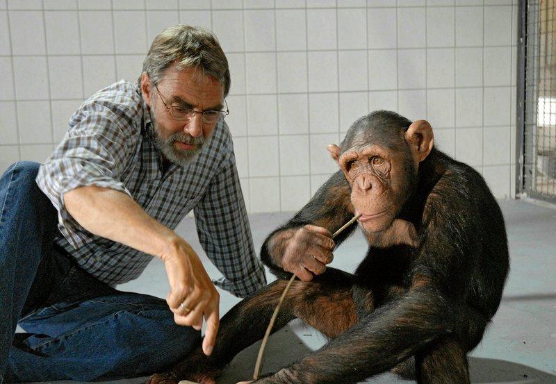 Prof. Baumgart (Gunter Schoß) versucht dem in menschlicher Obhut aufgewachsenen Schimpansen Ringo tierisches Verhalten beizubringen, um ihn im Zoo in ein Rudel integrieren zu können. – Bild: ARD/BR/Christa Köfer