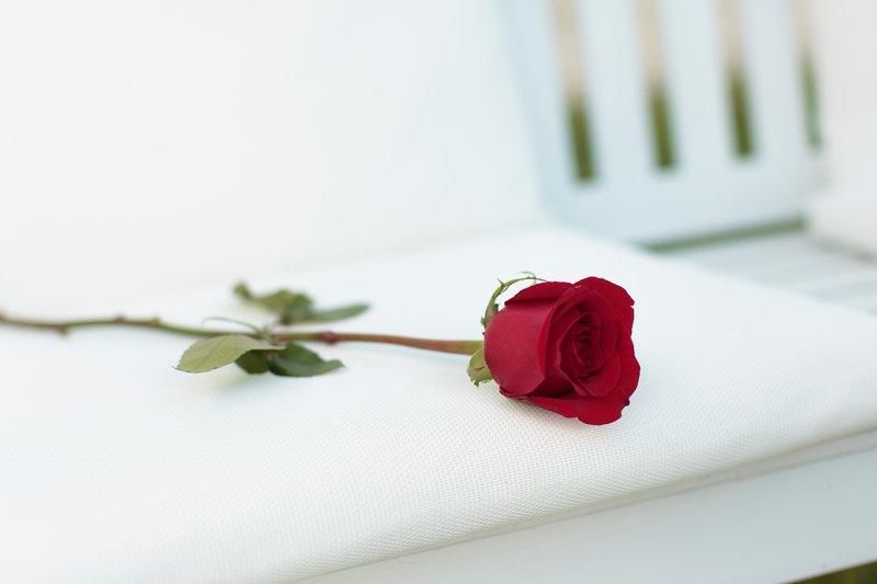 Welche der 22 begehrenswerten Single-Damen schafft es, den Bachelor zu umgarnen? Wer bekommt in der Nacht der Entscheidung eine Rose? – Bild: Tom Clark Photography Foto: MG RTL D / Tom Clark