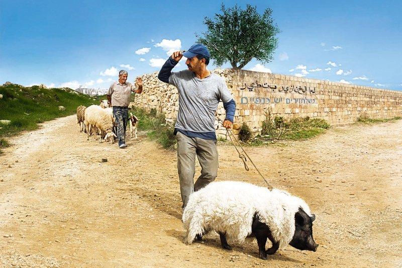 Bayerisches Fernsehen DAS SCHWEIN VON GAZA, am Samstag (22.11.14) um 23:00 Uhr. Jafaar (Sasson Gabai, rechts) tarnt das Schwein als Schaf, damit seine Glaubensgenossen nicht herausfinden, dass er den Eber zu Zuchtzwecken an eine israelische Siedlerin ausleiht. – Bild: BR/Telepool/Alamode Film