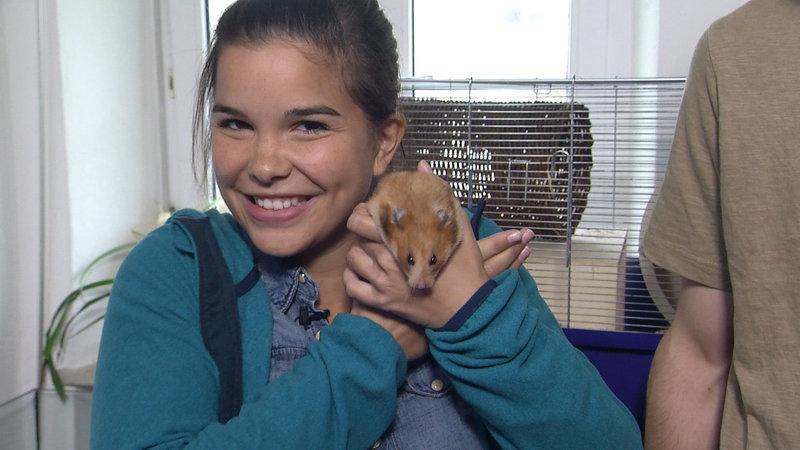 Anna Und Die Haustiere Hamster