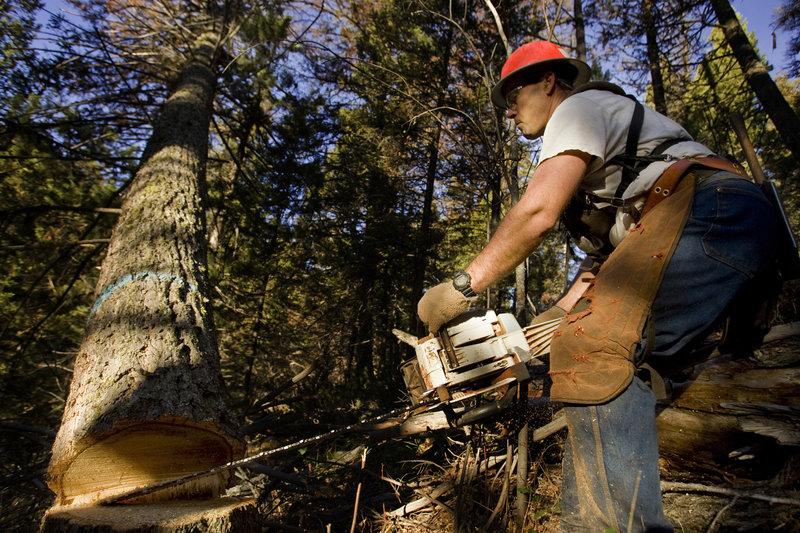 Ax Men Season2 The Reckoning Part1, Ax Men Staffel2 Jede Sekunde zählt Tree being cut and falling.. – Bild: ProSieben MAXX