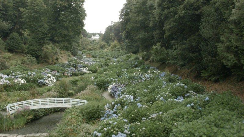 Trebah ist eine Gartenanlage mit subtropischem Bewuchs in Cornwall. – Bild: Sky