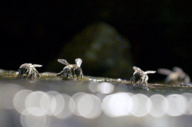 Eine Wasserquelle ist in der Nähe eines Bienenstocks lebensnotwendig, da ein Stock im Jahr ganze 80 Liter verbraucht. – Bild: arte