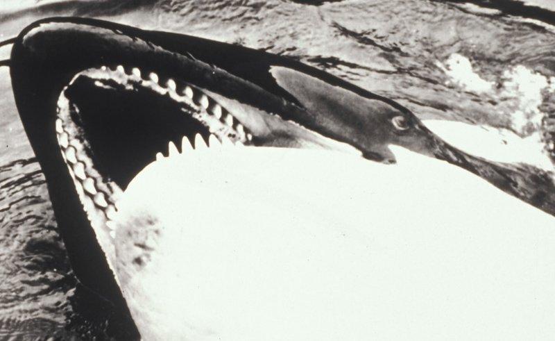 Angriffslustige Haie und Wale rächen sich grausam an Tierquälern ... – Bild: sat1/kabel1
