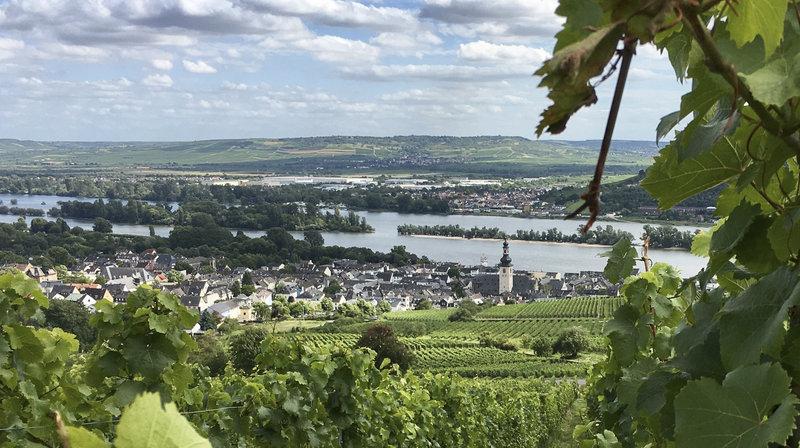 Blick auf Rüdesheim von der Jugendherberge Rüdesheim aus. – Bild: HR/Friso Richter