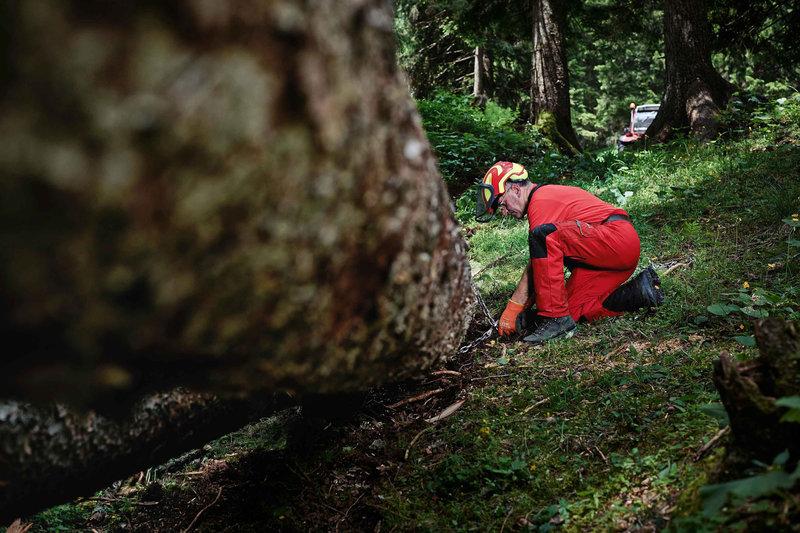Kletterausrüstung Baum Fällen : Abenteuer Österreich 07: mit mut und motorsäge u2013 baumkletterer im
