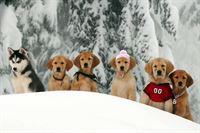 Snow Buddies – Abenteuer in Alaska – Bild: Super RTL