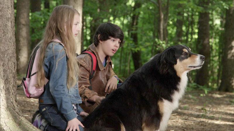 Bark Ranger - Mein Hund, der Held – Bild: RTL II