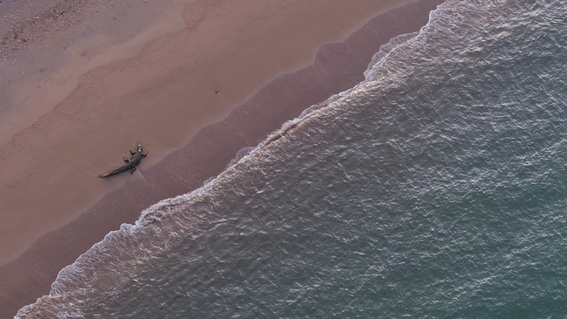 Croc Brutus spends most of time close to the beach. The Shark v Croc team discover that 'saltie's' are using the coastline like a river bank. – Bild: Discovery Channel / Discovery Communications