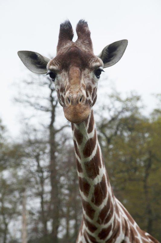 Kurioses aus der Tierwelt Staffel 1 Episodenguide – fernsehserien.de