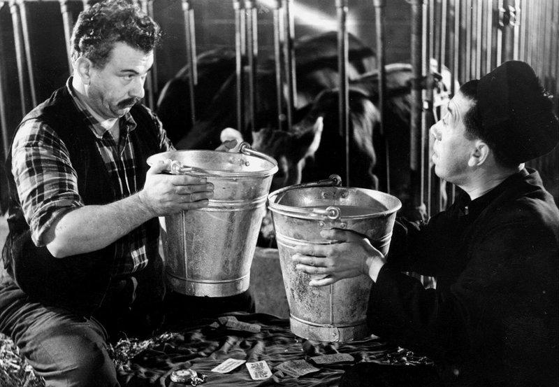 Manchmal müssen Don Camillo (Fernandel, rechts) und der grantige Peppone (Gino Cervi) eben doch zusammenarbeiten: zum Beispiel im Kuhstall. – Bild: BR/ARD Degeto