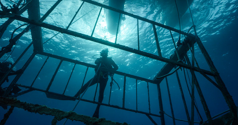 A diver is with the Lost Cage. – Bild: Discovery Channel / Discovery Communications