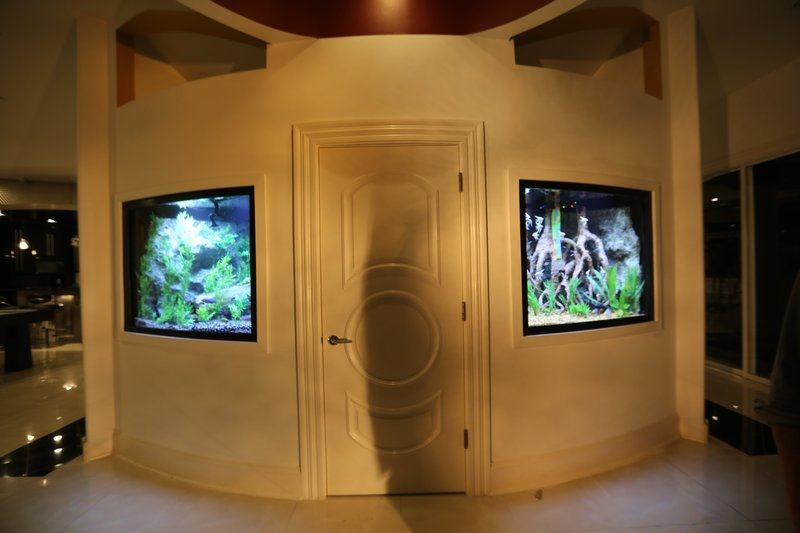 Paul George's twin tanks look great in his radial wall! – Bild: Animal Planet / Discovery Communications