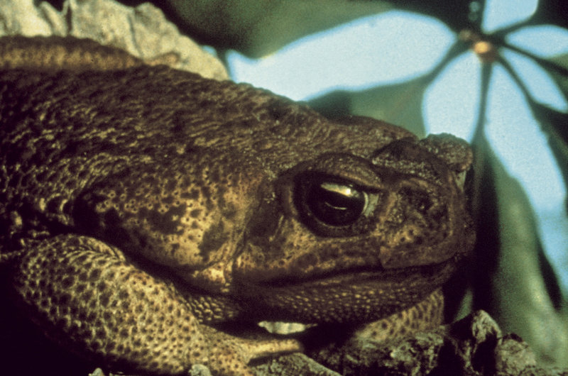Frogs - Killer aus dem Sumpf – Bild: METRO GOLDWYN MAYER