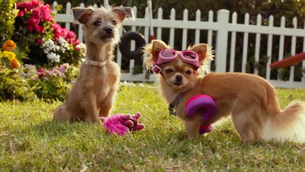 Beverly Hills Chihuahua 3: Viva la Fiesta – Bild: ORF