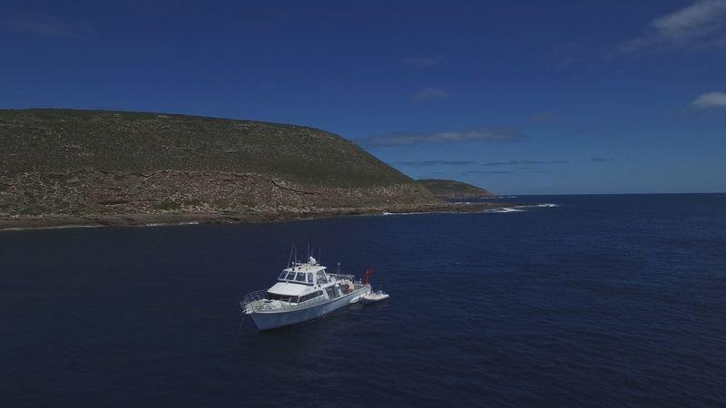 Die Insel der Weißen Haie (Staffel 29, Folge 3) – Bild: DCI / For Show Promotion Only
