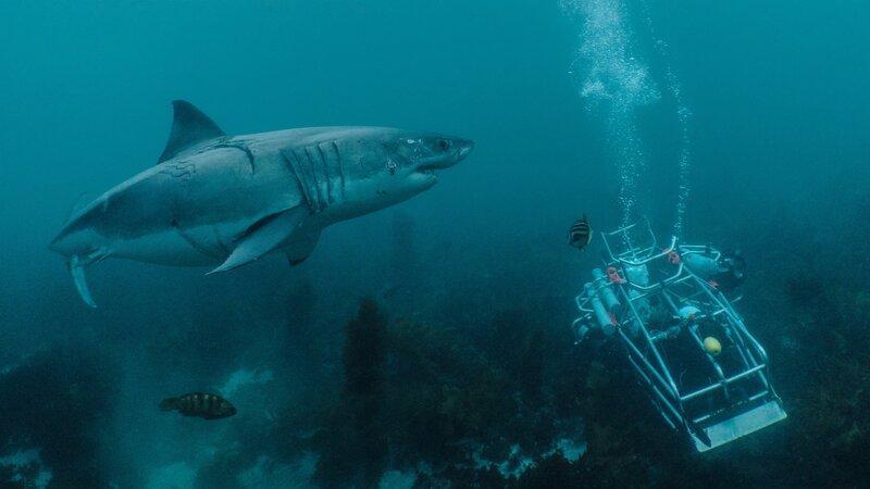 Buoyancy Problems – Bild: Mark V Erdmann / Discovery Channel / Photobank: 37216_066.jpg / Discovery Communications, LLC