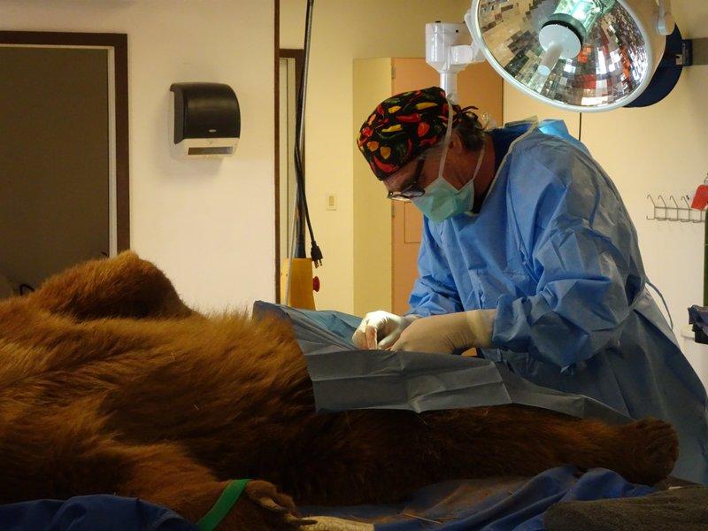 Tierarzt Dr Jeff 2021