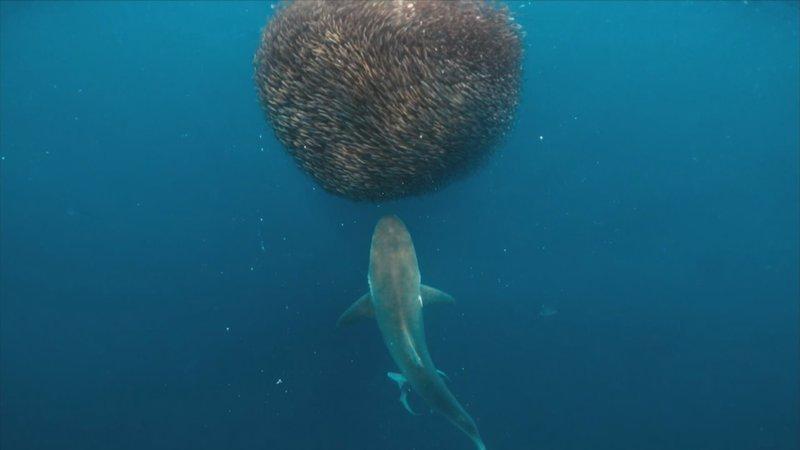 Year of Shark – Bild: DCI