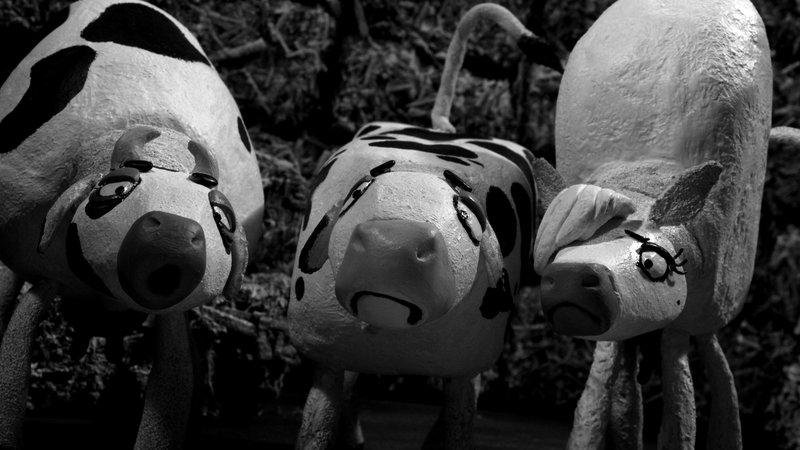 """18 Kühe zwischen zwei Fronten – Bild: ARTE France Honorarfreie Verwendung nur im Zusammenhang mit genannter Sendung und bei folgender Nennung """"Bild: Sendeanstalt/Copyright"""". Andere Verwendungen nur nach vorheriger Absprache: ARTE-Bildreda"""