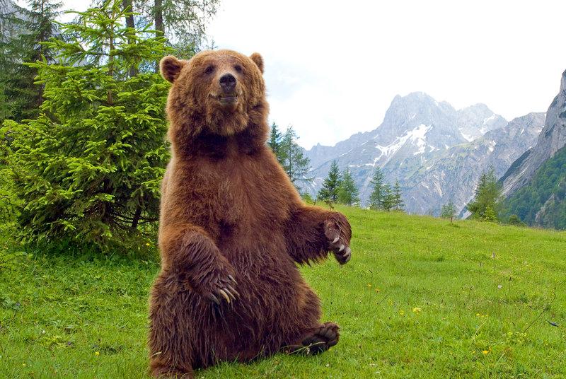 Tirol und Bayern sind in Aufruhr. Braunbär Bruno geht um. – Bild: 3sat