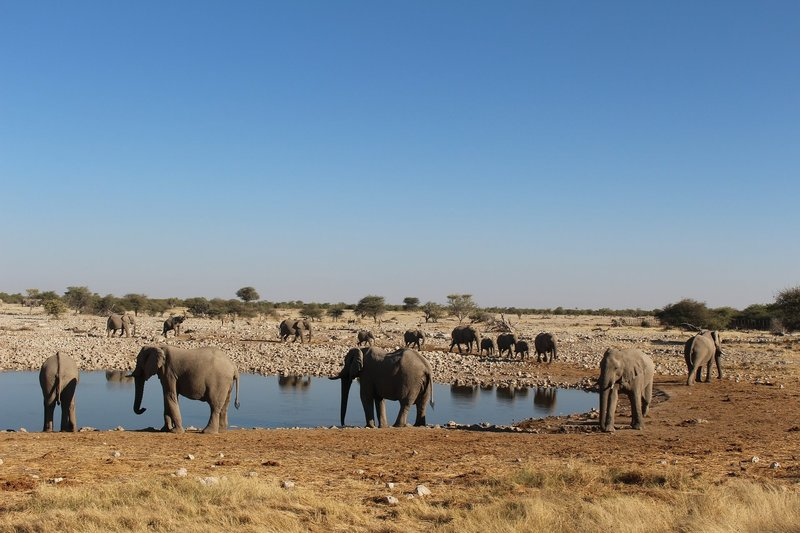 Elephants, Namibia – Bild: Pixabay License