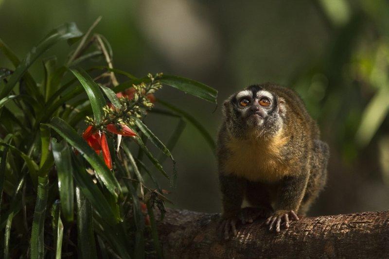 Amazonia: Abenteuer im Regenwald – Bild: Copyright ITV MEDIA GROUP
