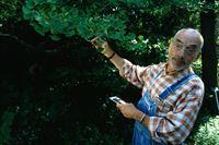 Peter sucht den Entenfußbaum (Staffel 20, Folge 8) – © ZDF