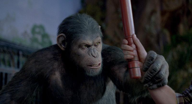 Als Caesar gegen Wills Willen in ein Tierheim abgeschoben wird, wo er der Willkür sadistischer Wärter ausgeliefert ist, sorgt er schon bald dafür, dass seine Intelligenz auf seine struppigen Artgenossen übergeht. Mit fatalen Folgen für die Menschheit ... – Bild: Puls 4