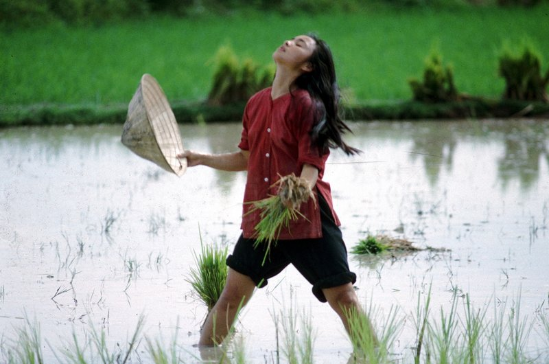 Vietnam zur Zeit des Krieges: Le Ly (Hiep Thi Le) ist die Tochter eines Reisbauern in Vietnam. Mit ihrer Mutter und ihren Geschwistern arbeitet sie auf den heimatlichen Feldern. – Bild: Puls 8