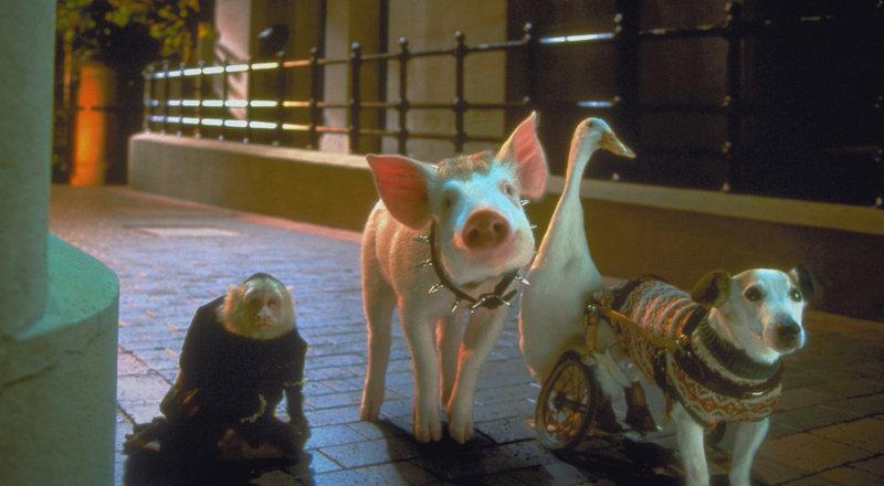 Muss einigen Spott über sich ergehen lassen: Schweinchen Babe ... – Bild: Puls 8