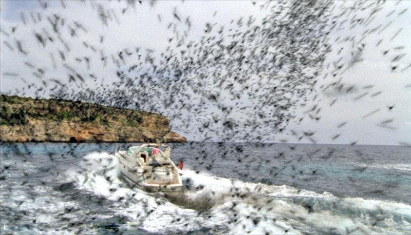 Auf der schönen Balearen-Insel Mallorca attackieren aggressive Bienenschwärme Menschen und Tiere. – Bild: Puls 8
