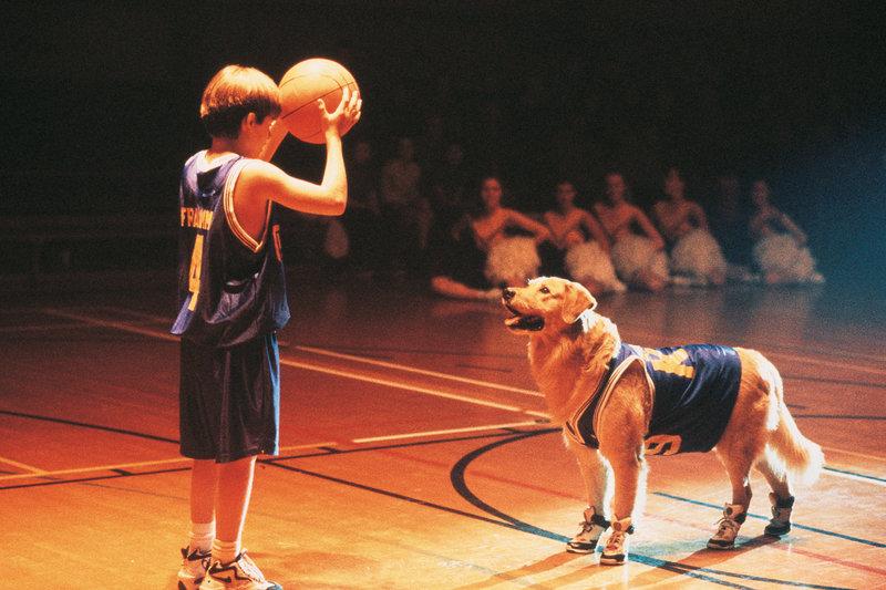 Nach dem Tod seines Vaters zieht der elfjährige Josh mit seiner Mutter nach Fernfield. Eines Tages trifft er auf den Hund Buddy. Buddy hat ein außergewöhnliches Talent: Der Golden Retriever kann Basketball spielen! – Bild: 1997 Buddy Films Inc., All Rights Reserved