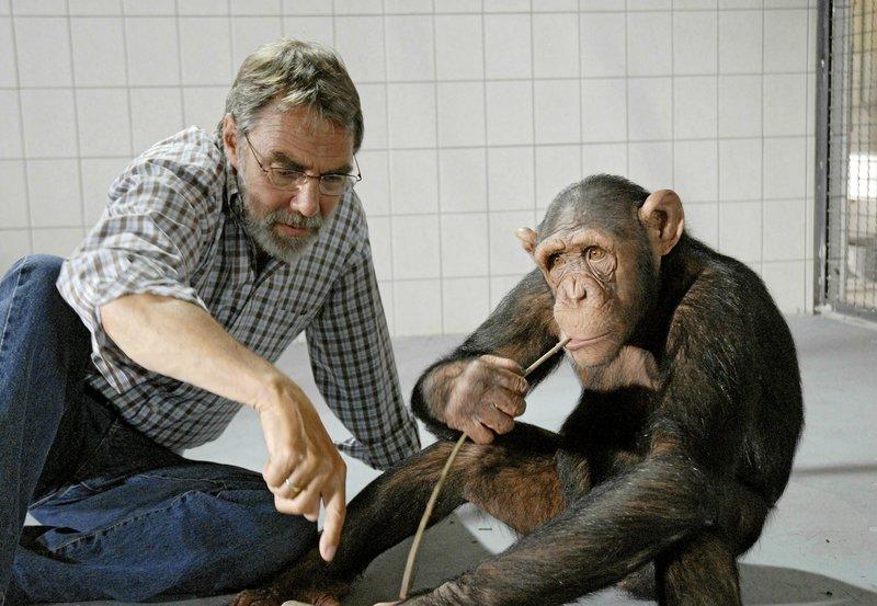 """MDR Fernsehen TIERÄRZTIN DR. MERTENS I. STAFFEL, FOLGE 11, """"Die Erbschaft"""", am Samstag (30.04.11) um 10:15 Uhr. Prof. Baumgart (Gunter Schoß, l.) versucht dem in menschlicher Obhut aufgewachsenen Schimpansen Ringo tierisches Verhalten beizubringen, um ihn im Zoo in ein Rudel integrieren zu können. – Bild: MDR/Christa Köfer"""