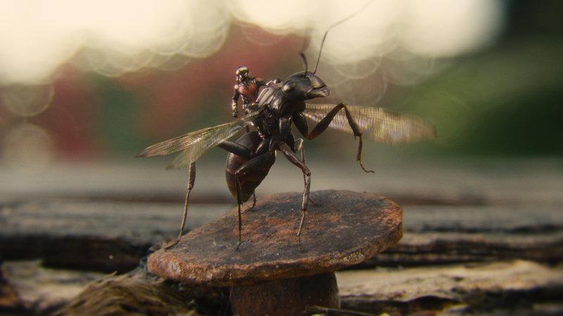 Marvel's Ant-Man/Scott Lang (Paul Rudd) riding Antony – Bild: Marvel 2015