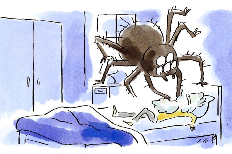 Spinnen Verschlucken