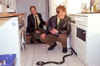 Alex (Felix Lampe) und Sonja (Eva Meier) finden in einem Mietshaus eine Giftschlange. Da es den Verdacht auf weitere giftige Tiere gibt, lässt Alex das komplette Wohnhaus mit Hilfe seiner Kollegen evakuieren. – © RTL Crime