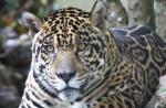 Der Jaguar (Folge 2) – Bild: NDR