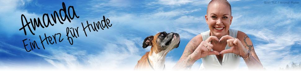 Amanda – Ein Herz für Hunde