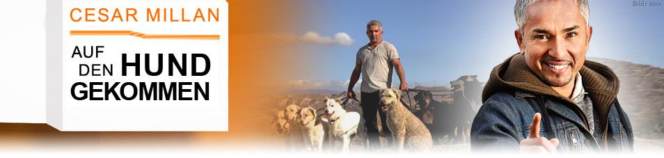 Cesar Millan: Auf den Hund gekommen