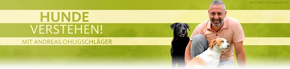 Hunde Verstehen Sendetermine 12 08 2019 29 06 2020 Fernsehserien De