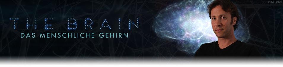 The Brain – Das menschliche Gehirn