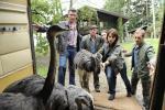 Komische Vögel (Staffel 22, Folge 11) – © ZDF
