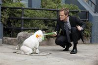 Während Ted und Victoria einen Wendepunkt in ihrer Beziehung erreichen, möchte Barney (Neil Patrick Harris) einen Hund zu seinem Begleiter beim Frauenaufreißen machen ... – © 2012 Twentieth Century Fox Film Corporation. All rights reserved.